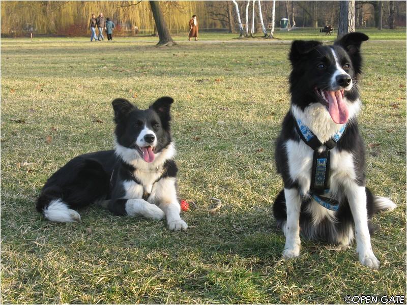 Annie & Jamie, 09. 02. 2008, photo © Jana Malinská