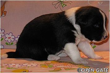pejsek č. 1, 16. 03. 2009, photo © Jana Malinská