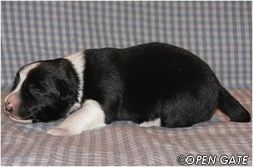 pejsek č. 1, 09. 03. 2009, photo © Jana Malinská