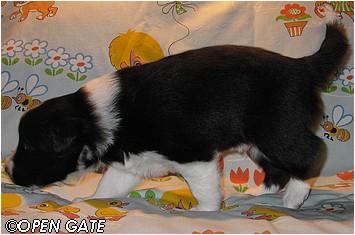 pejsek č. 1, 23. 03. 2009, photo © Jana Malinská