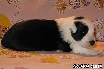 pejsek č. 2, 16. 03. 2009, photo © Jana Malinská
