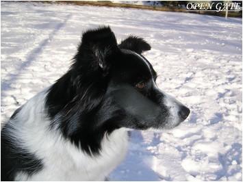 Daisy 05.03.06