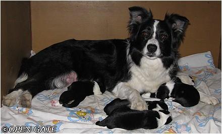 Daisy - litter B, 05. 03. 2009