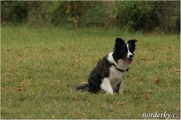 Daisy 17.09.05