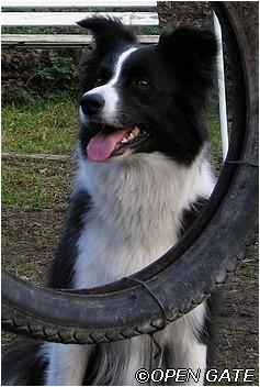 Daisy 28. 03. 2005, photo © Jana Malinská