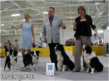 I´m Smarti Gasko Prim (V3), 