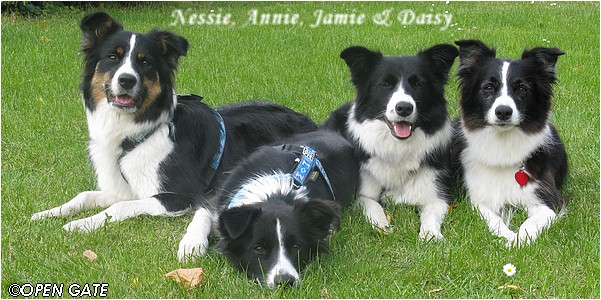 Nessie, Annie, Jamie & Daisy - Mělnický trojboj, 04. 10. 2008, photo © Jana Malinská