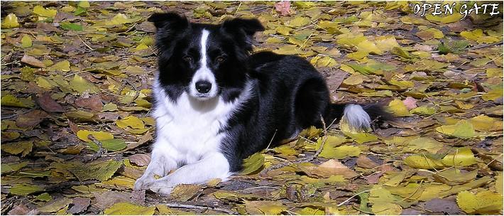 Daisy - 18. 10. 2006, photo © Blanka Malinská