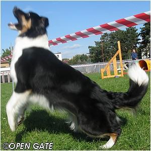 Ask Me Why Open Gate - 20 měsíců / 20 months,  05. 10. 2008, photo © Jana Malinská