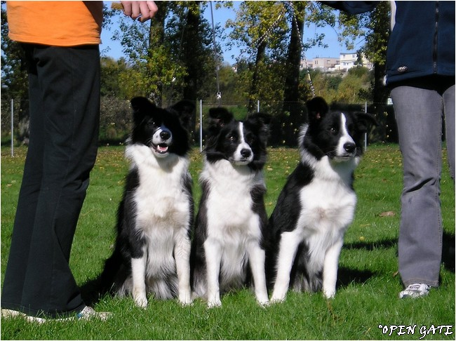 Jana, Jamie, Daisy, Arty & D. Komárková, 13. 10. 2007, photo © B. Malinská