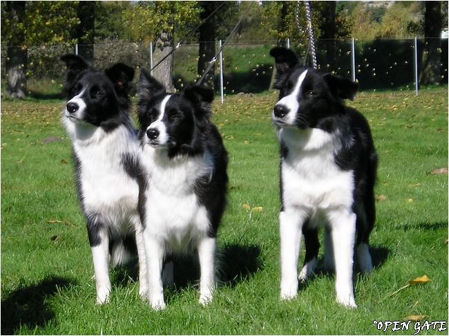 Jamie, Daisy & Arty, 13. 10. 2007, photo © B. Malinská