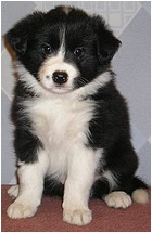 Another Girl OG - Jamie / 6 týdnů (6 weeks), 