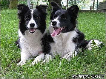 Daisy & Jamie, 22. 05. 09, photo © Blanka Malinská