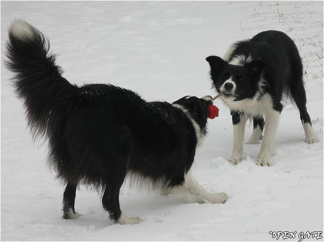 Jamie & Daisy, 06. 01. 2008, photo © Jana Malinská