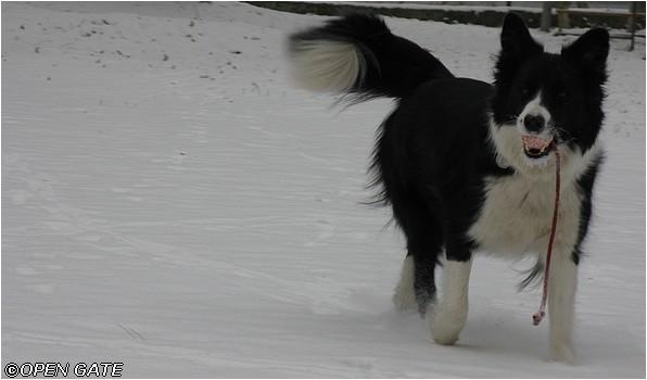 Jamie, 19. 12. 2009, foto © Jana Malinská