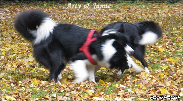 Arty & Jamie, 11. 10. 2008
