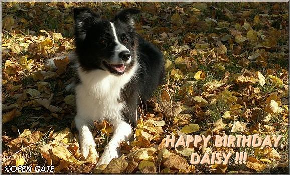 Daisy, 12. 10. 2008