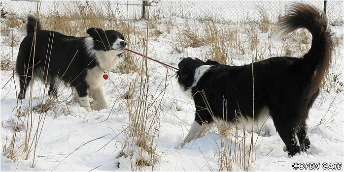 Jamie & Daisy, 22. 11. 2008
