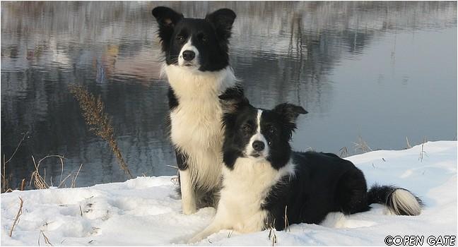Jamie & Daisy, 10. 01. 2009
