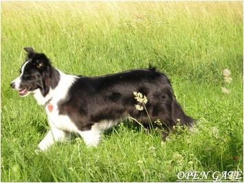 Daisy 24.06.04