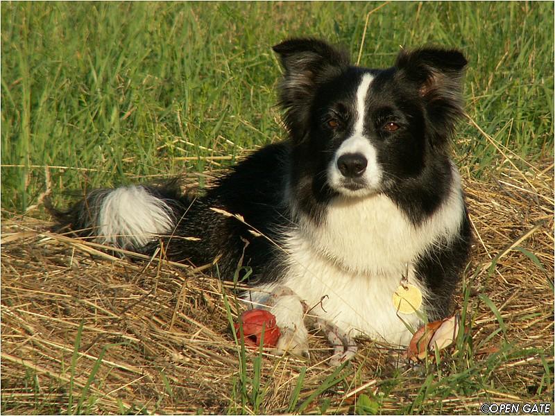 Daisy, 05. 07. 2008, photo © Jan Malinský
